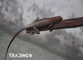 chameleon trading11 analyza