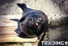 trading11 analyza Tulen