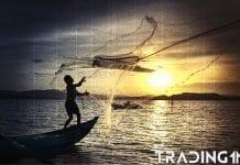 rybacka trading11 analyza