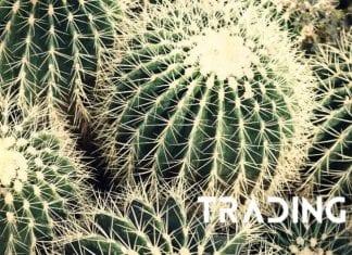 kaktus analyza trading11