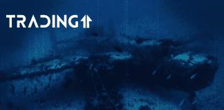 altcoiny dno analyza trading11