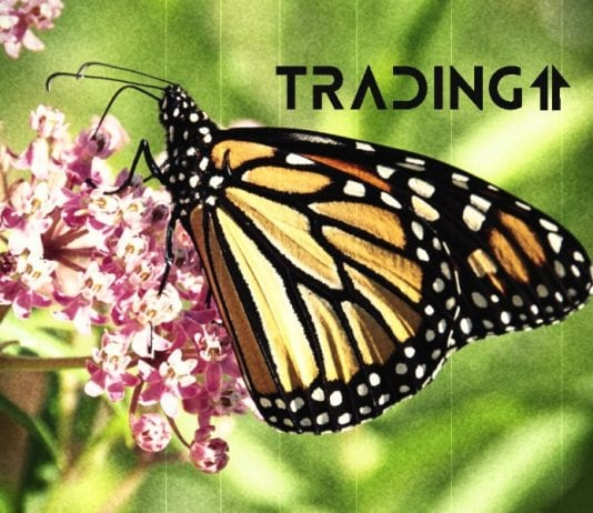 motyl update trading11