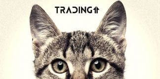 dead cat bounce trading11 analyza