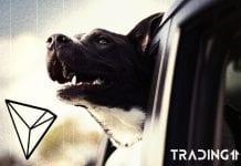 tron dog trading11 analyza