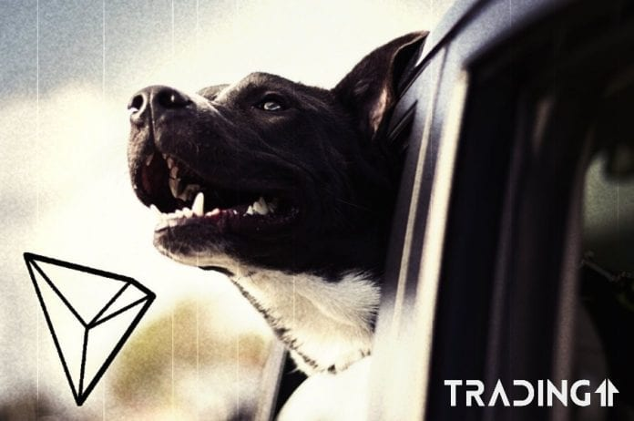 tron dog trading11 analyza