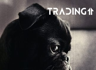 dog analyza trading11 sad