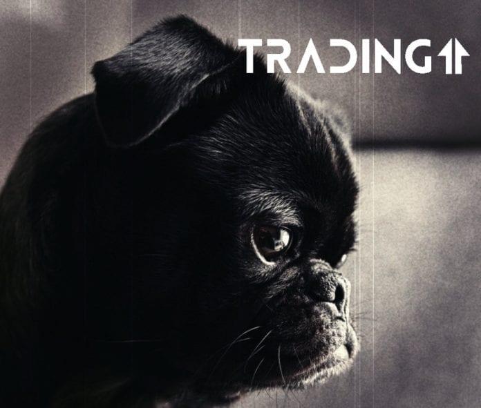 dog analyza trading11 sad