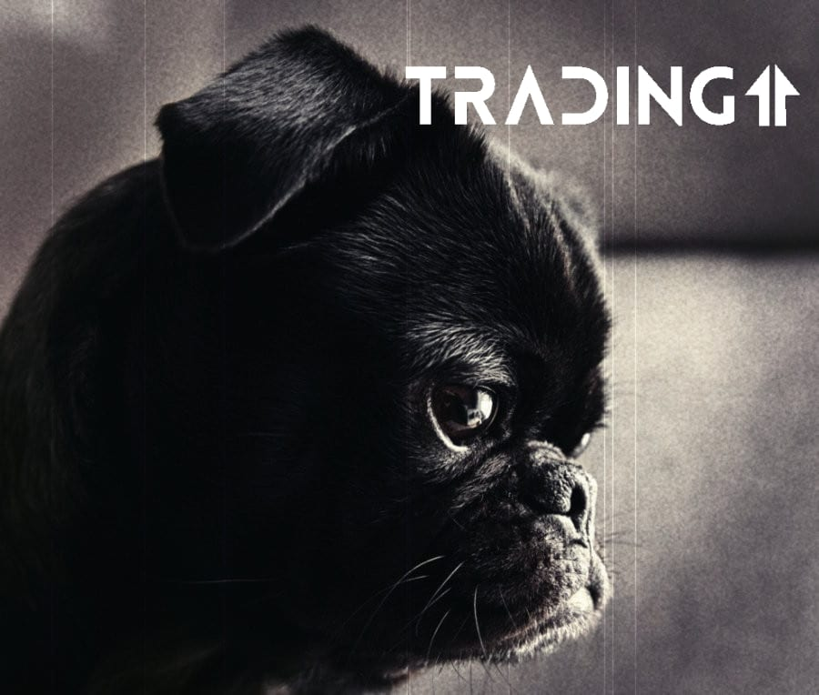 analyza trading11 doge coin