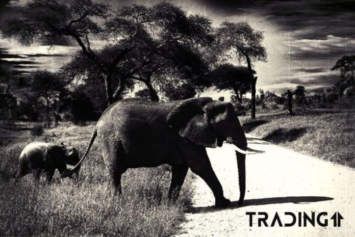 prvni krok trading11 analyza