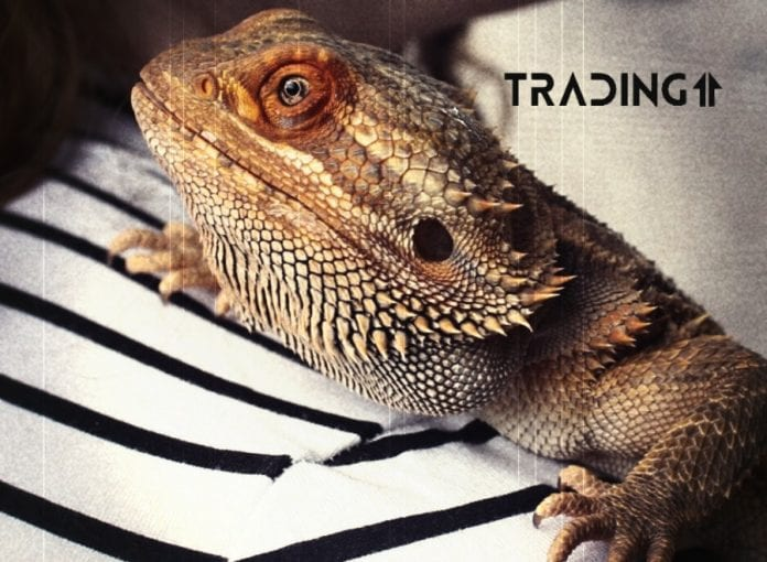 update analýza trading11 altcoiny