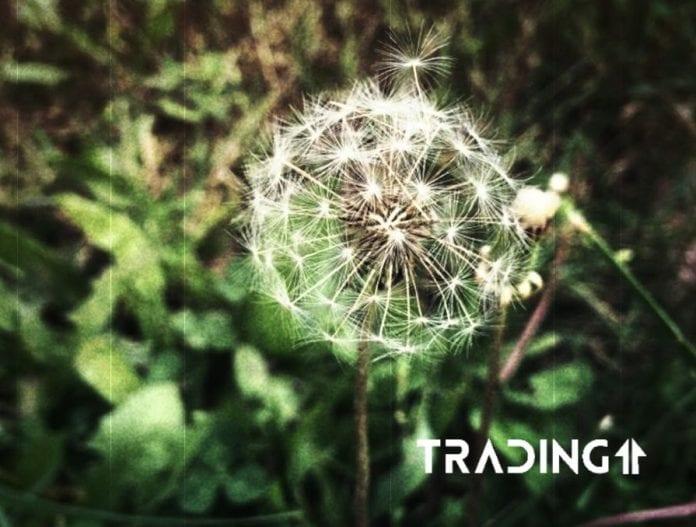 update analyza trading11