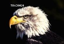 update trading 11 analýza