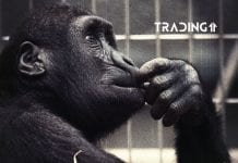 kapizalizácia trading11 analyza