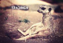 support podpora analyza trading11