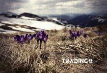 kapitalizácia altcoinov trading11