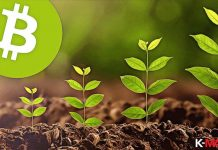 bitcoin grow up to green plant