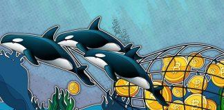Co chystají na trhu whales a kam se pohne BTC? Dávejte si pozor, pokud obchodujete