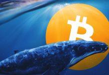 , Analyzy Bitcoin, TRADING11