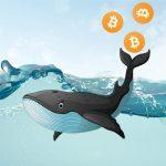 Bitcoin překonal $50 000 a testuje rezistenci! Je to definitivní KONEC korekce?